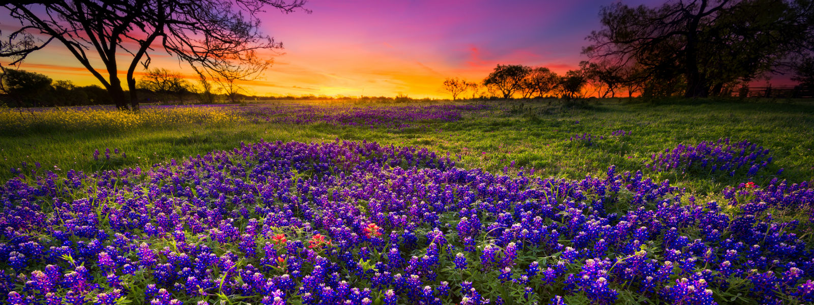 Beautiful Texas Landscape